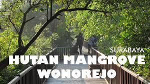 Hutan Mangrove Wonorejo Di Surabaya Yang Tenang Dan Indah